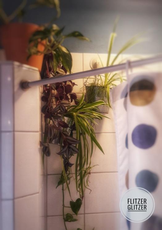 duschpflanze