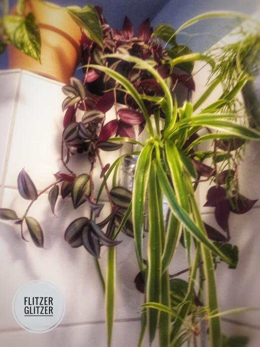 duschpflanzen2