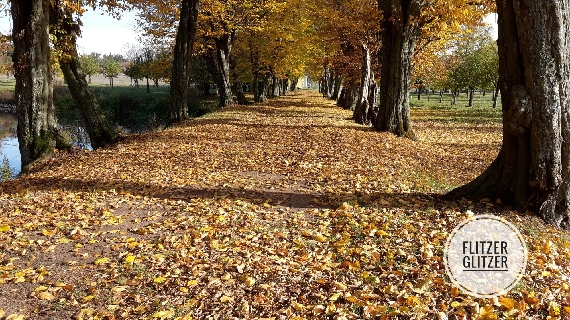 Alte Buchenallee im Herbstlaub
