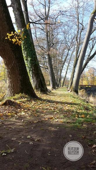 Alte Buchenallee im Herbstkleid
