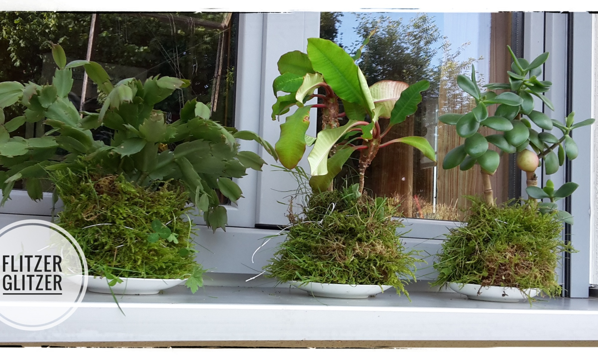 Drei Zimmerpflanzen in Mooskugeln gepackt.