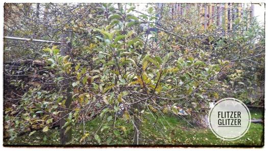Auch wenn nicht mehr ganz leuchtend, so trägt dieser Apfelbaum doch noch einen Großteil seiner Blätter.